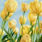 Art Drawing - Colors of Spring - Flowers - Tulips