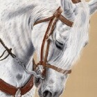 Art Drawing - Horse Portrait - Animal