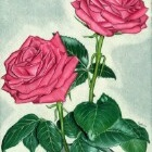 Art Drawing - Roses - Flower