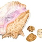 Art Drawing - Seashells 01 - Ocean - Sea