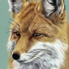 Art Dessin - Portrait de Renard 01 - Animal