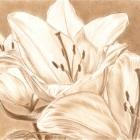 Art Drawing - Lilies - Flower - Monochrome
