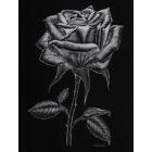 Art Drawing - Silver Rose - Flower