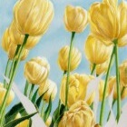 Art Drawing - Making of Colors of Spring - Flowers - Tulips - Step 4