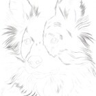 Art Drawing - Making of Dog Portrait 02 - Animal - Border Collie - Step 1