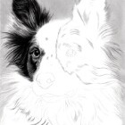 Art Drawing - Making of Dog Portrait 02 - Animal - Border Collie - Step 2
