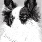 Art Drawing - Making of Dog Portrait 02 - Animal - Border Collie - Step 3