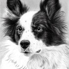 Art Drawing - Making of Dog Portrait 02 - Animal - Border Collie - Step 4