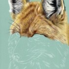 Art Drawing - Making of Fox Portrait 01 - Animal - Step 3