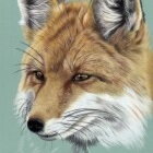 Art Drawing - Making of Fox Portrait 01 - Animal - Step 4