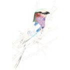 Art Drawing - Making of Lilac Breasted Roller - Bird - Step 2