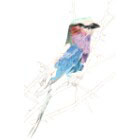 Art Drawing - Making of Lilac Breasted Roller - Bird - Step 3