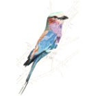 Art Drawing - Making of Lilac Breasted Roller - Bird - Step 4