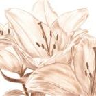 Art Drawing - Making of Lilies - Flower - Monochrome - Step 5
