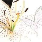 Art Drawing - Making of White Lily - Flower - Butterfly - Step 2