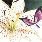Art Drawing - Making of White Lily - Flower - Butterfly - Step 3