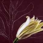 Art Drawing - Making of Magnolia - Flower - Step 1