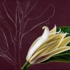 Art Drawing - Making of Magnolia - Flower - Step 2