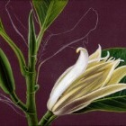 Art Drawing - Making of Magnolia - Flower - Step 3