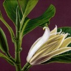 Art Drawing - Making of Magnolia - Flower - Step 4