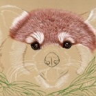 Art Drawing - Making of Red Panda Portrait 01 - Animal - Step 2