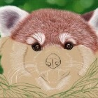 Art Drawing - Making of Red Panda Portrait 01 - Animal - Step 3