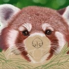 Art Drawing - Making of Red Panda Portrait 01 - Animal - Step 4