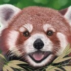 Art Drawing - Making of Red Panda Portrait 01 - Animal - Step 5