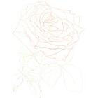 Art Drawing - Making of For ever beautiful - Rose - Flower - Step 1