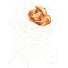 Art Drawing - Making of For ever beautiful - Rose - Flower - Step 2