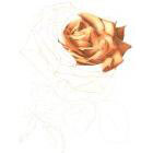 Art Drawing - Making of For ever beautiful - Rose - Flower - Step 3