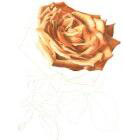 Art Drawing - Making of For ever beautiful - Rose - Flower - Step 4