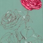Art Drawing - Making of Roses - Flower - Step 2