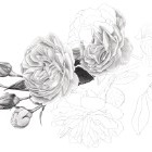 Art Drawing - Making of 'Sweetheart let us see if the rose' - Flower - Rose - Step 3
