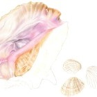 Art Drawing - Making of Seashells 01 - Sea - Ocean - Step 2